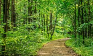 Depositphotos 101662298 Stock Photo Beautiful Countryside Road Lane Path