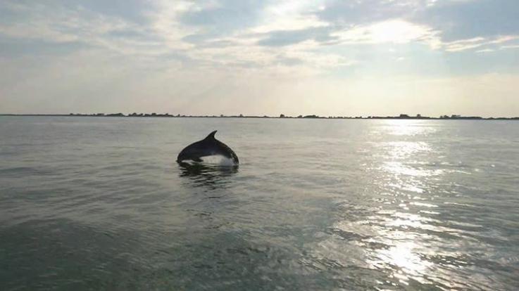 Delta del Po Sup Adventures360- Delfini nel Delta del Po
