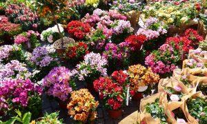 Adria in fiore-Fiori