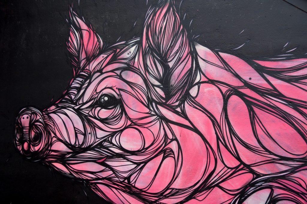 il-maiale-polesano-tra-storia-e-storie-Disegno di Maiale