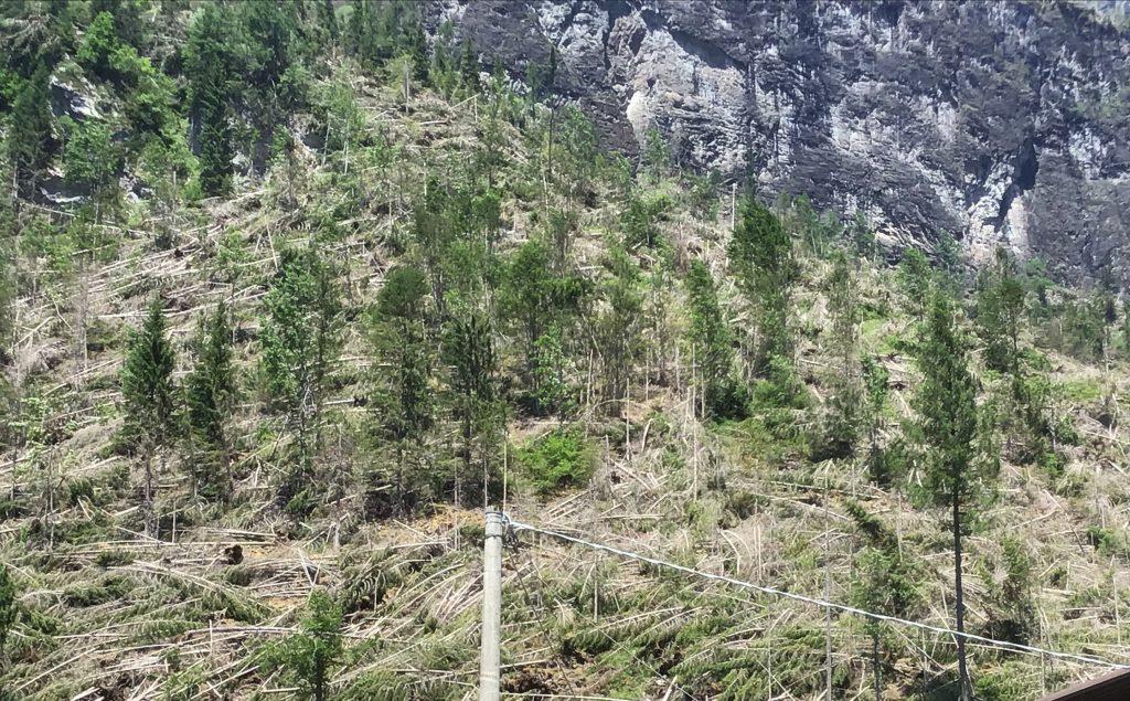 la Marmolada boschi devastati