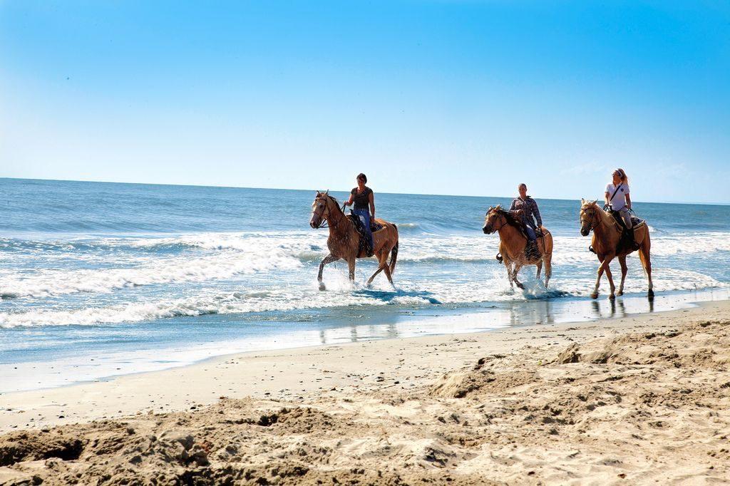 Cavalli che corrono lungo la spiaggia