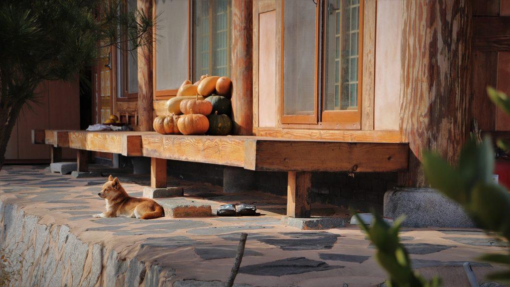 le tradizioni del 2 di novembre in polesine Esterno di una casa in campagna con zucche su una panca.