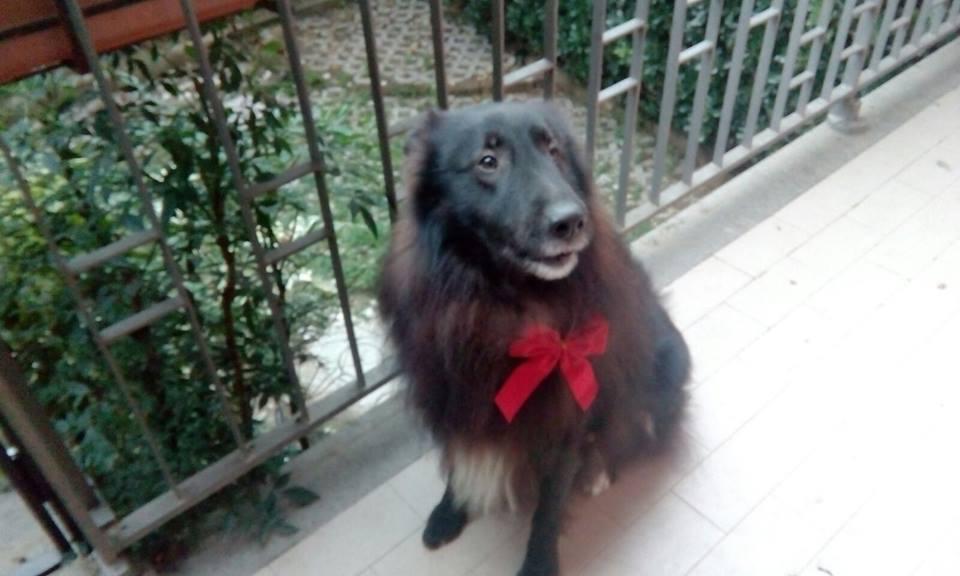 Tradizione Vuole Che Il 26 Novembre Si Metta Un Fiocco Rosso Al Proprio Cane