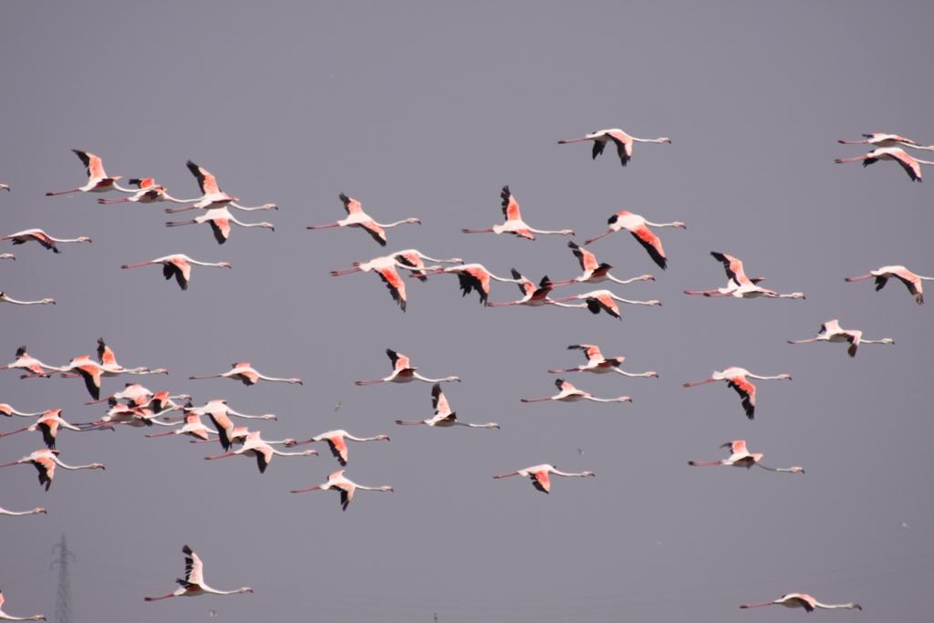 aqua natura e cultura fenicotteri rosa