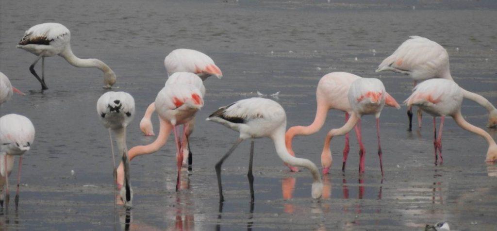 i-fenicotteri-rosa-del-delta-del-po