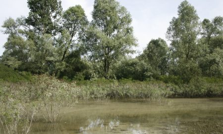 Habitat Rana Toro