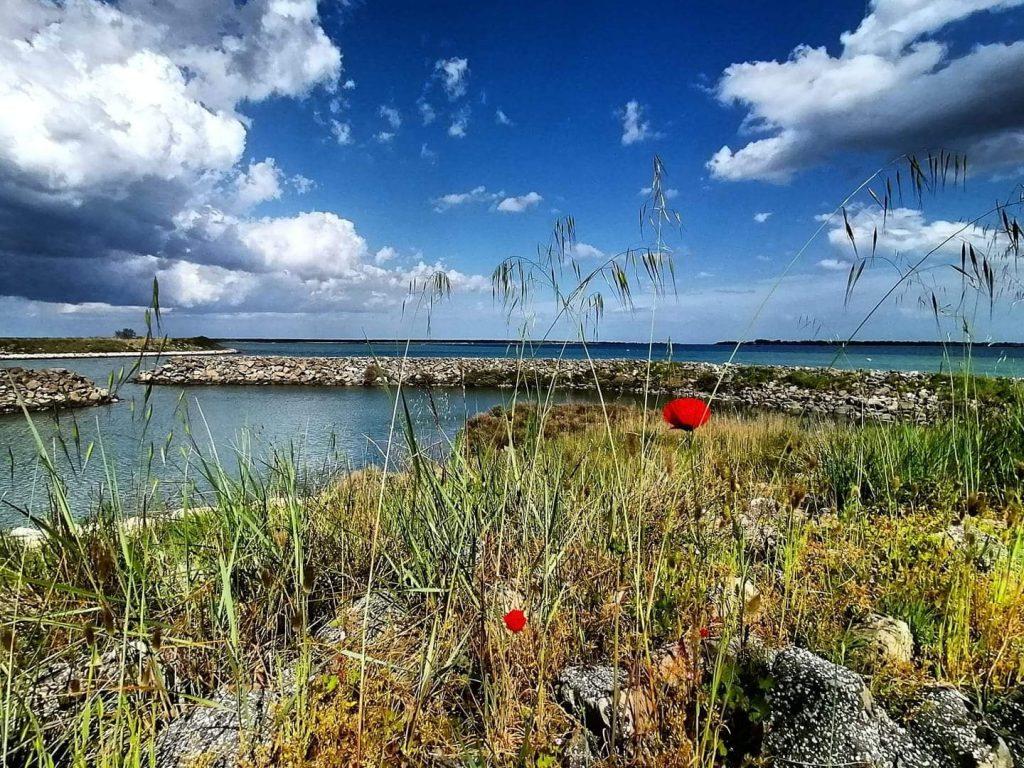 L'isola della Donzella Marta Rossi