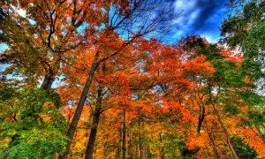 Autunno In Valle D'aosta: alberi