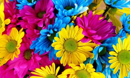 primavera valle d'aosta - alcuni fiori