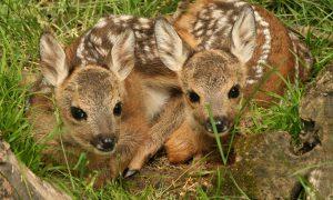 parc animalier - cerbiatti