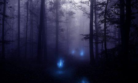 Ciamoseira Immagine foresta notturna