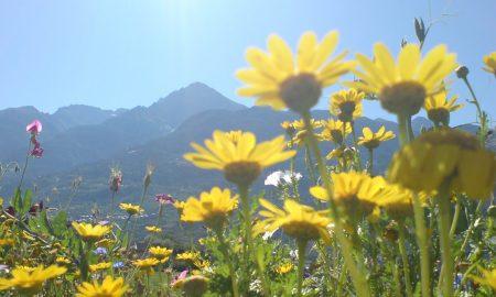 Cropped Prati Fioriti Aosta.jpg