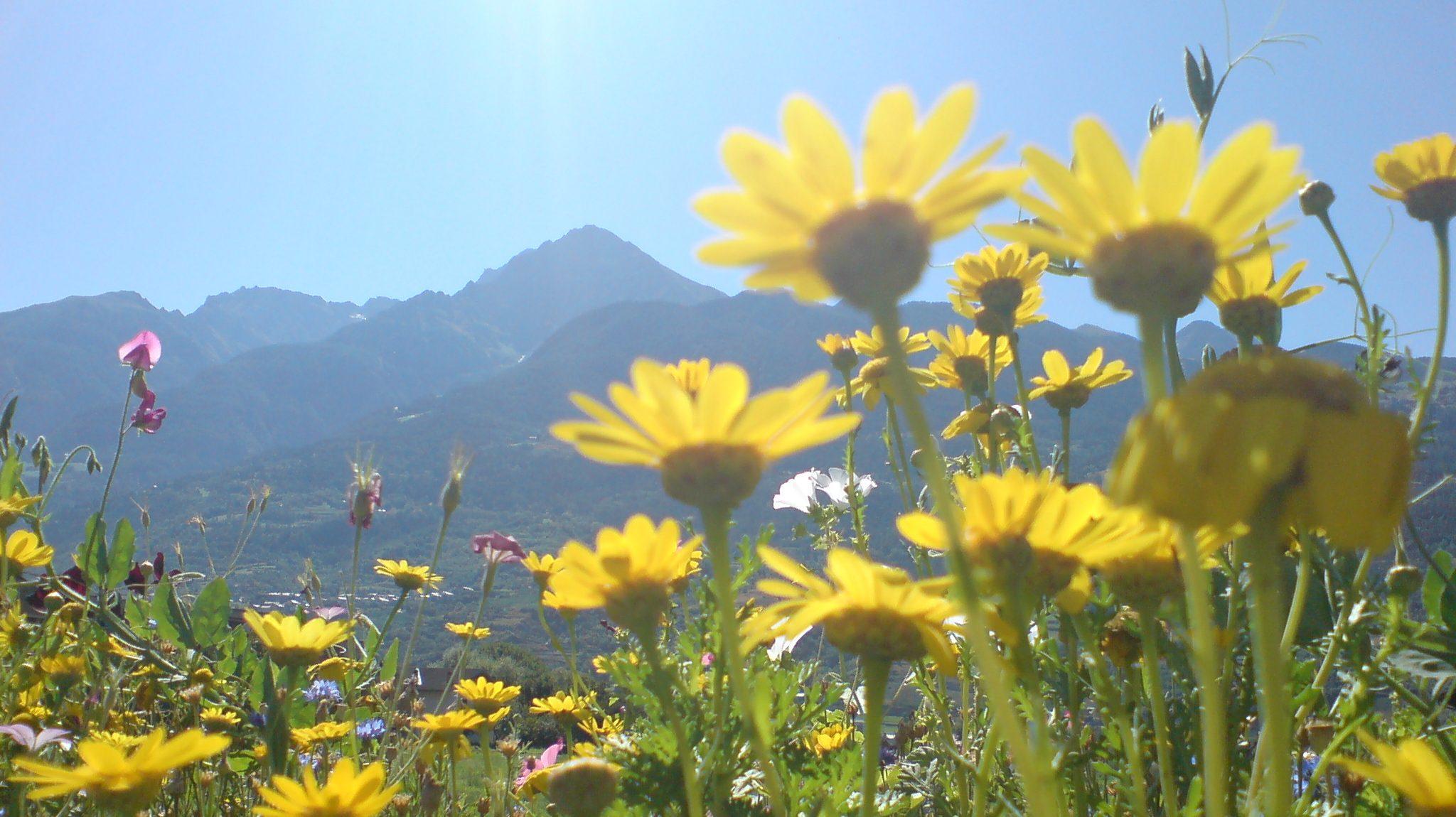 Arte Del Rustico Aosta feste d'agosto ad aosta, tra musica, religione e tradizione