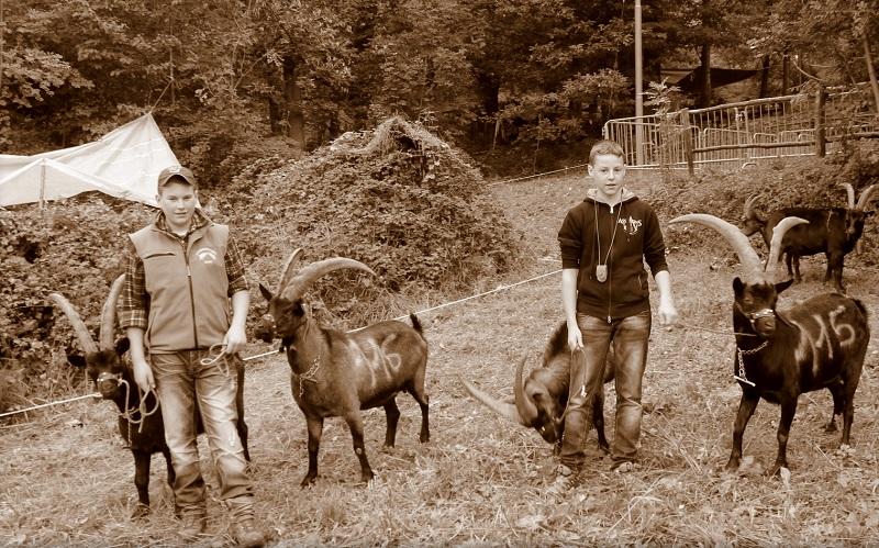 Foto D'epoca Delle Batailles des Chèvres