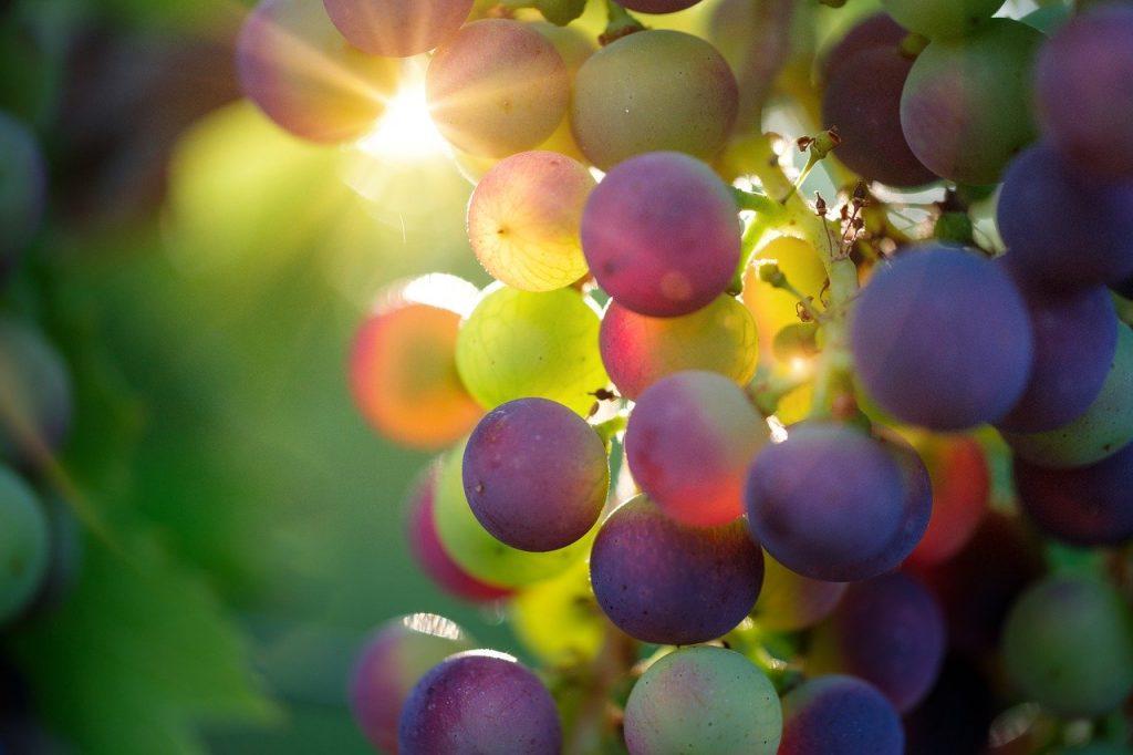 vini d'alta quota - Acini D'uva