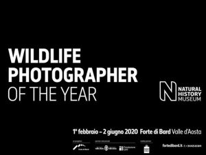 Wildlife Photographer of the Year 2020