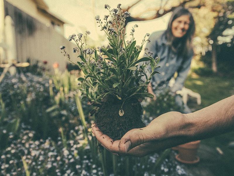 Giardinaggio, benvenuta primavera