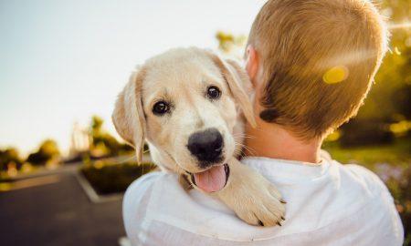cani a Barcellona-cane in spalla al bambino