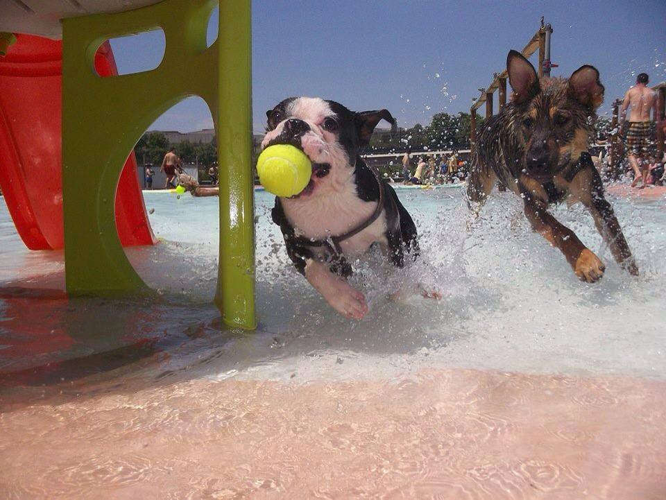 cani a Barcellona-cani in acqua al resort