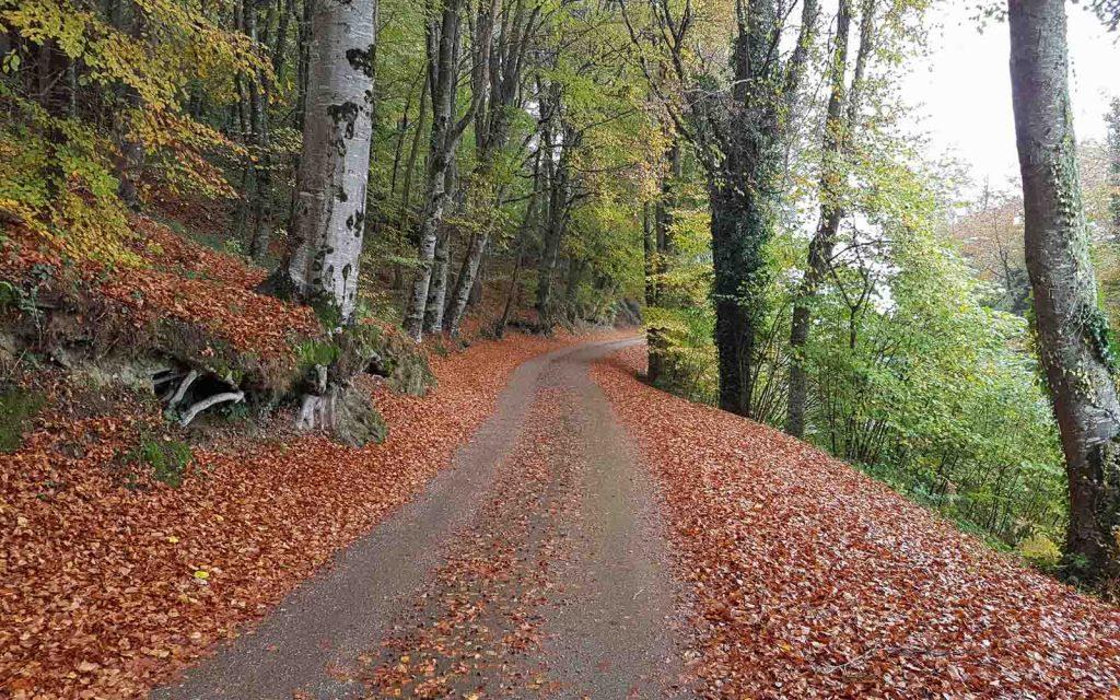 Paesaggi autunnali catalani-Parco Garrotxa
