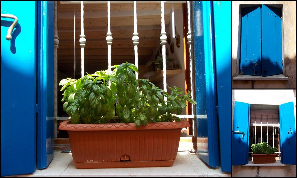 quarantena-giardinaggio Basilico