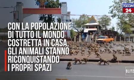Specie animali-Animali In Strada