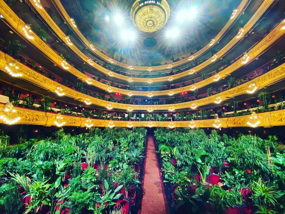 concerto green-Pubblico Piante