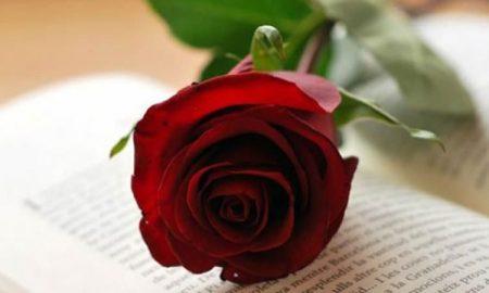 Giorno Del Libro E Della Rosa