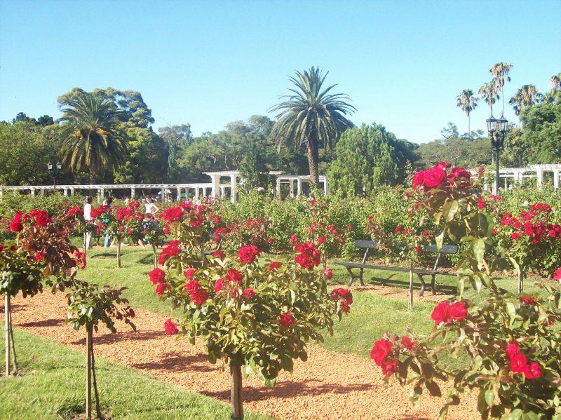 Rosedal - La magia de las rosas