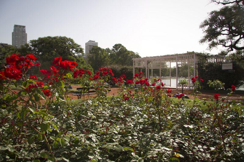 Rosedal - El Rosedal y sus maravillas