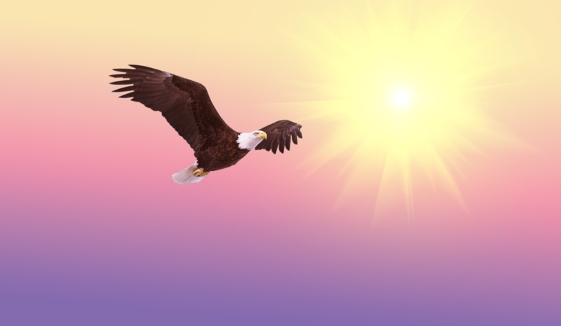 25 de mayo - Aguila