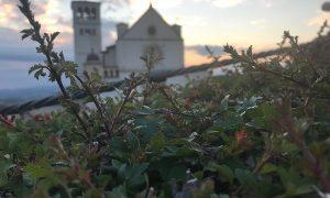 Docentes de italiano - Basilica de Assisi