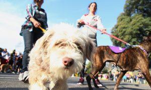 Pet Friendly - Mascotas Con Sus Dueños