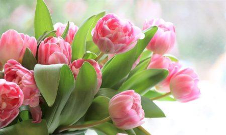 Día de la Mujer - Tulipanes
