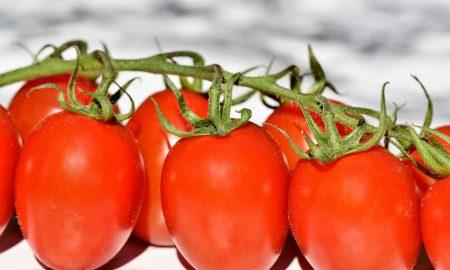 Conserva de tomates - Tomates
