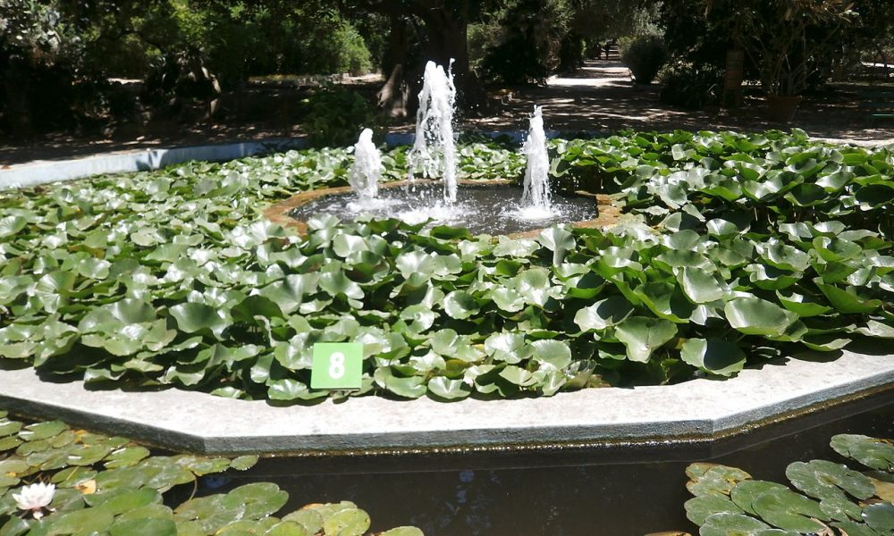 Orto Botanico Di Cagliari 98