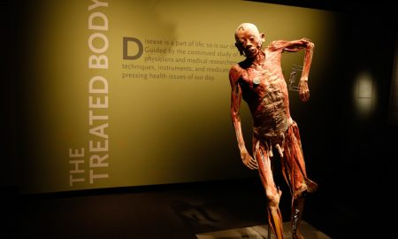Bodies, The Exhibition (fonte Premier Exhibitions)
