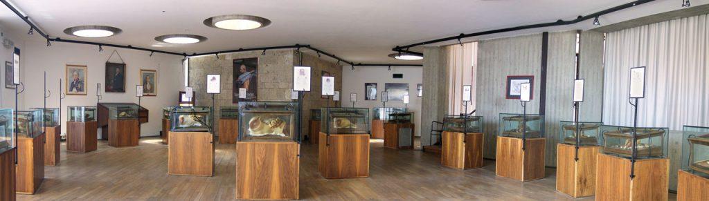 Sala Museo delle Cere Anatomiche di Clemente Susini (Fonte: Università degli Studi di Cagliari)
