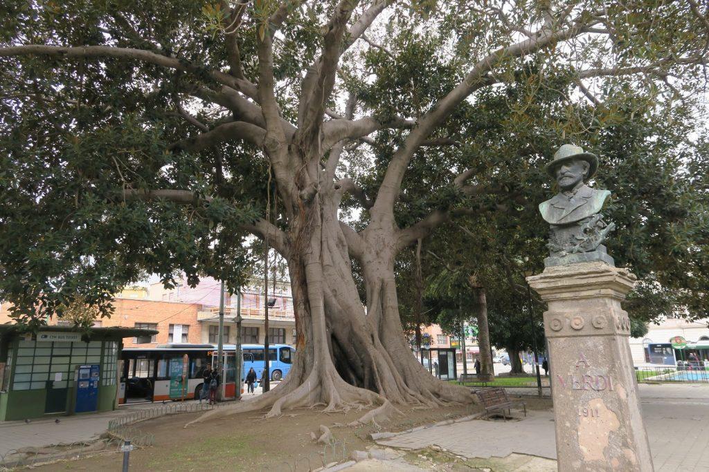 Il Mistero di Piazza Matteotti e Il Verdi 'sbagliato'. In questa foto si vede in primo piano il busto di Giuseppe Verdi con la data sbagliata e sullo sfondo uno dei maestosi alberi della Piazza.