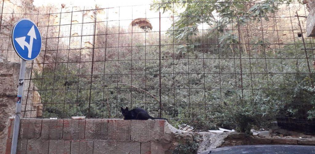 Portico Laconi, erbacce, gatto, macerie