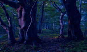 una foresta al buio con alberi in primo pianoCompare Fiasco
