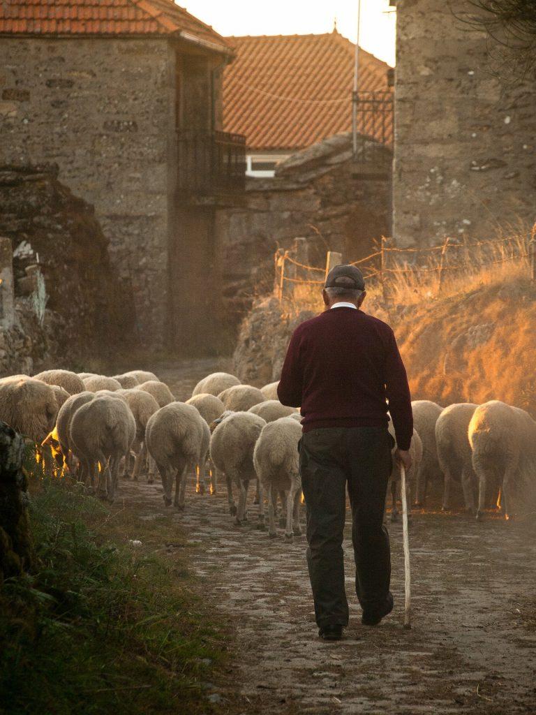 Molise Art - Pastore Con Gregge Di Pecore