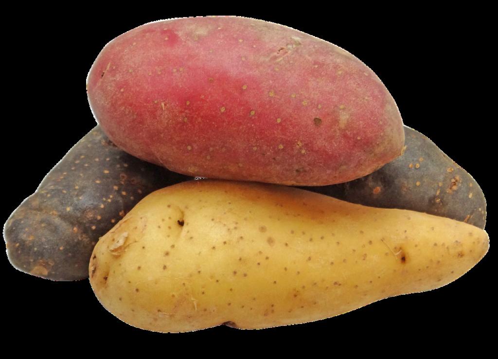 Patata - Patate