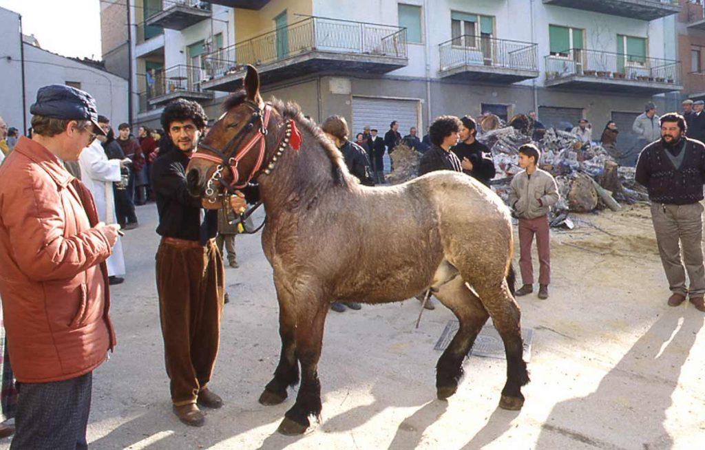 Sant'Antonio Abate - Cavallo
