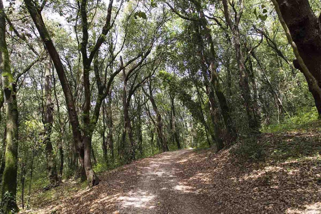 bosco di san silvestro