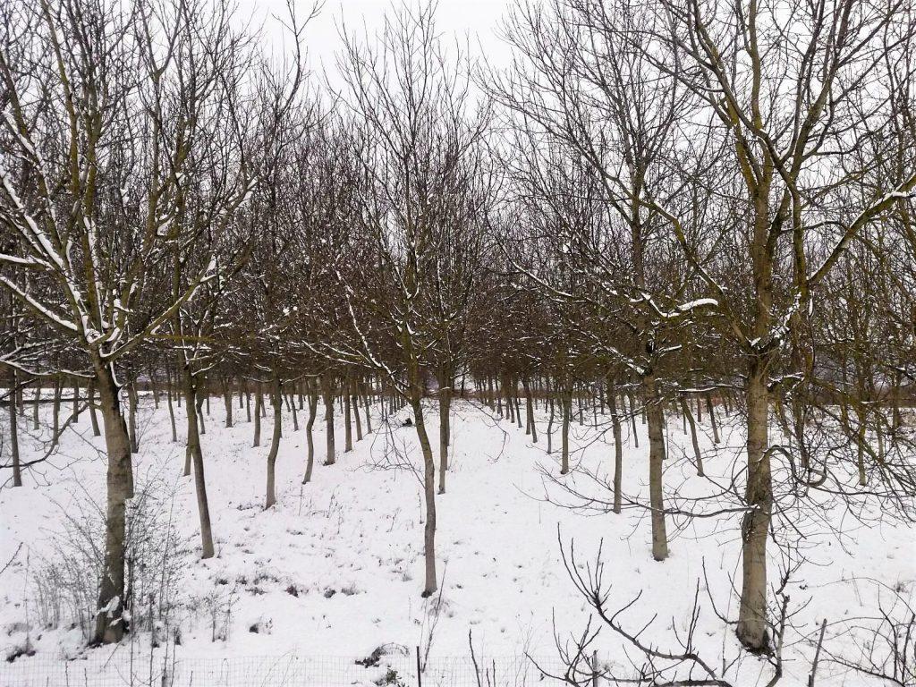 la neve a Vairano Patenora