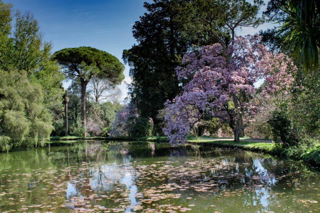 i fiori del giardino inglese della reggia di caserta