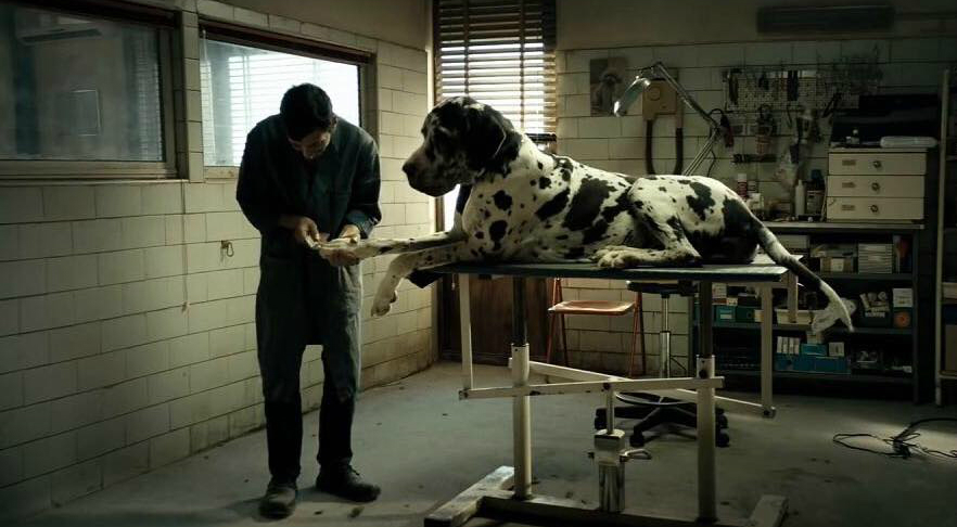 Dogman, una scena tratta dal film