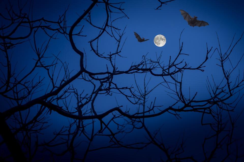 Secondo Nicola Valletta, i pipistrelli sarebbero la causa di convulsioni dovute al potere della iettatura